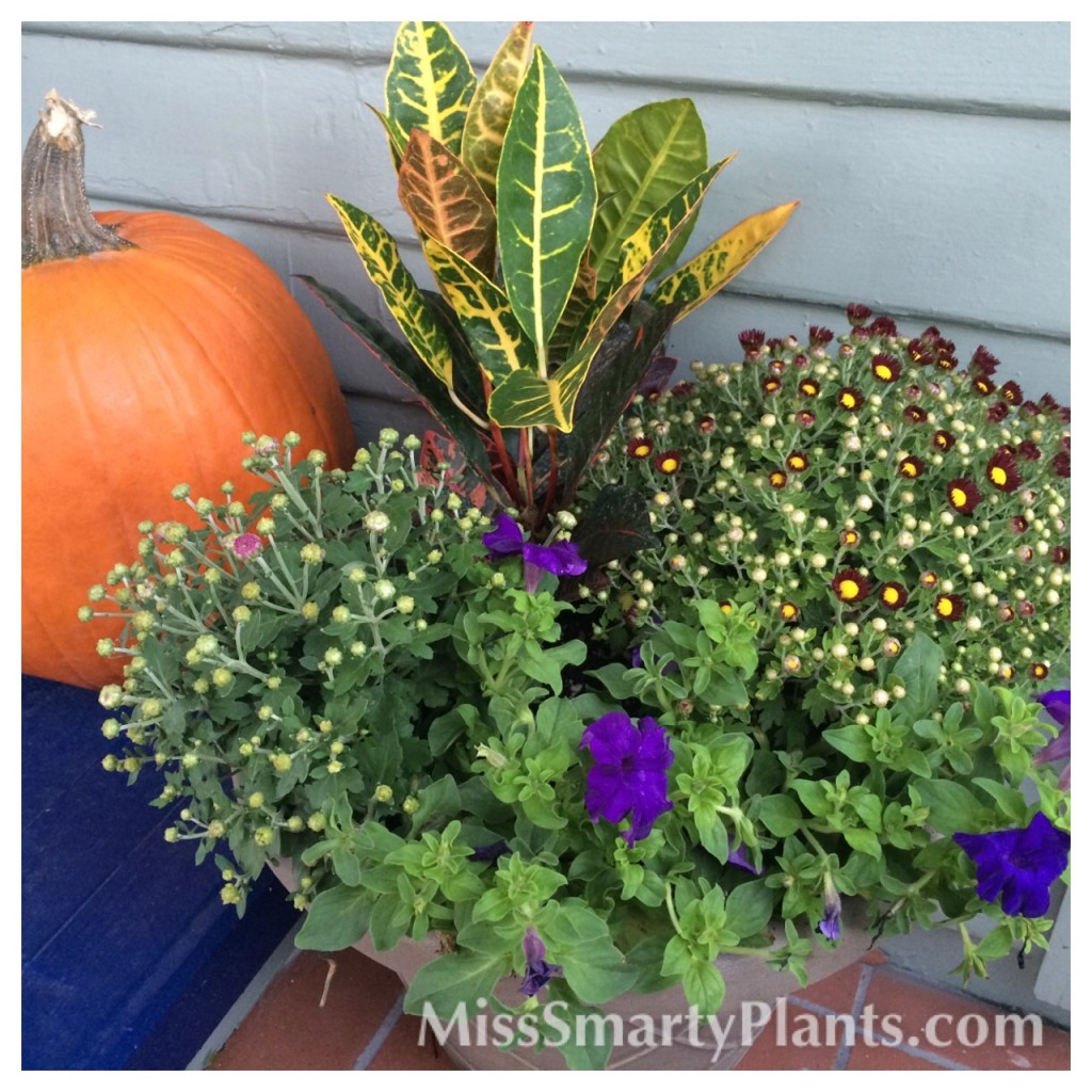 Easy Fall containers
