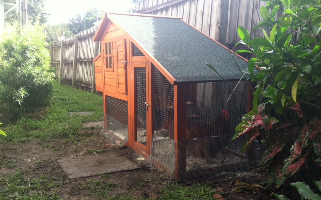 Our Inexpensive Chicken Coop