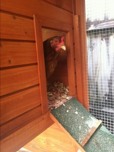 Inexpensive Chicken Coop