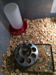 DIY home chick brooder