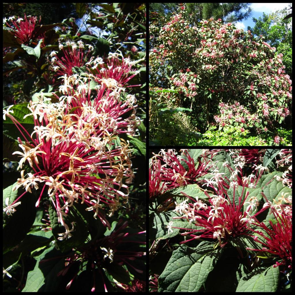 Cypress Gardens botanic gardens
