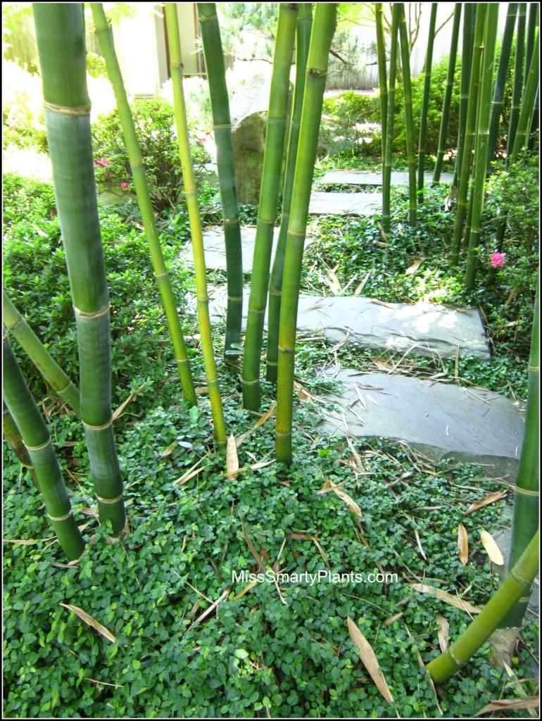 Visiting New Oreans Botanic Garden