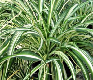 5 houseplants you won't kill