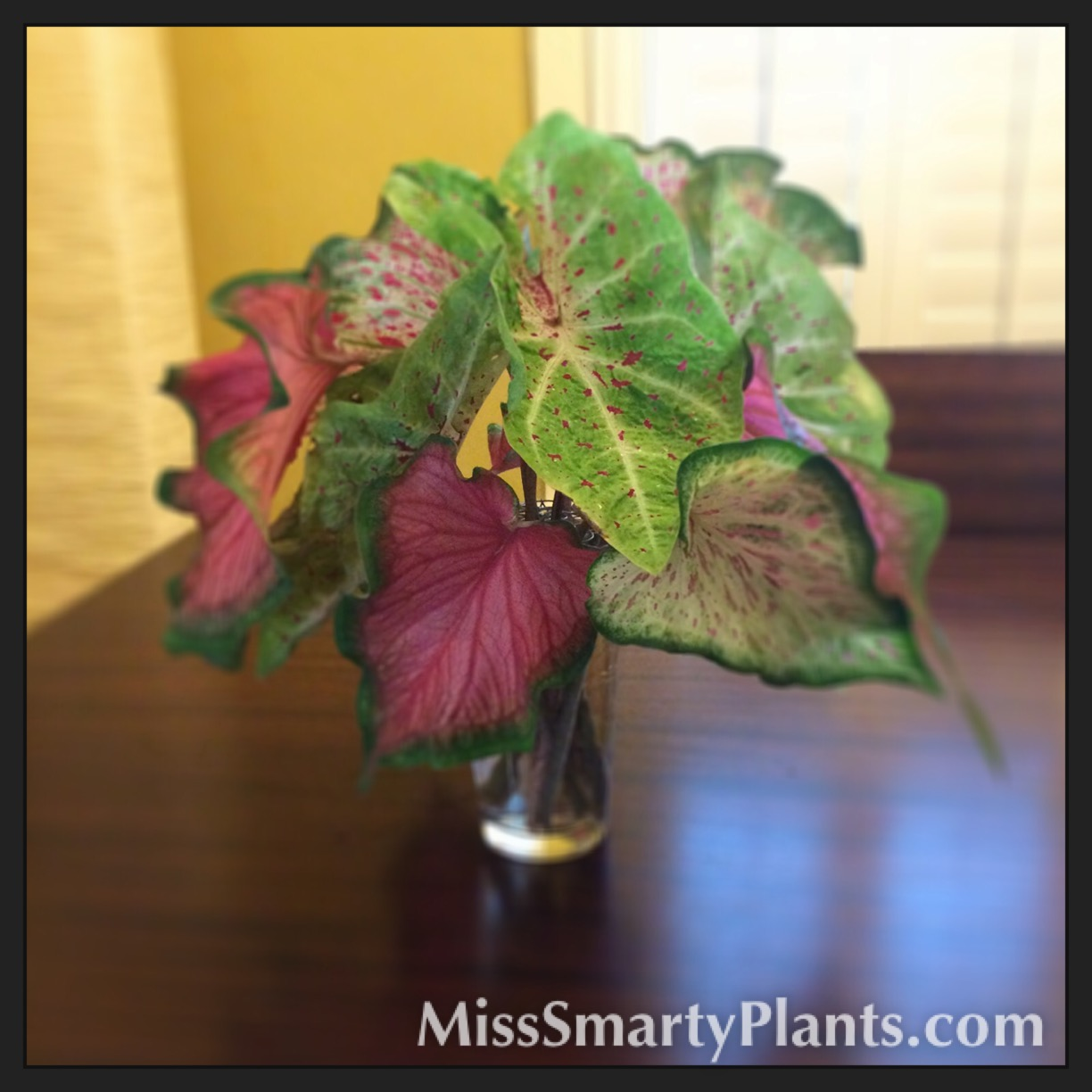 Caladiums in Flower Arrangements