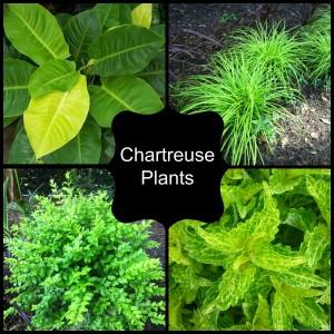 Chartreuse Plants