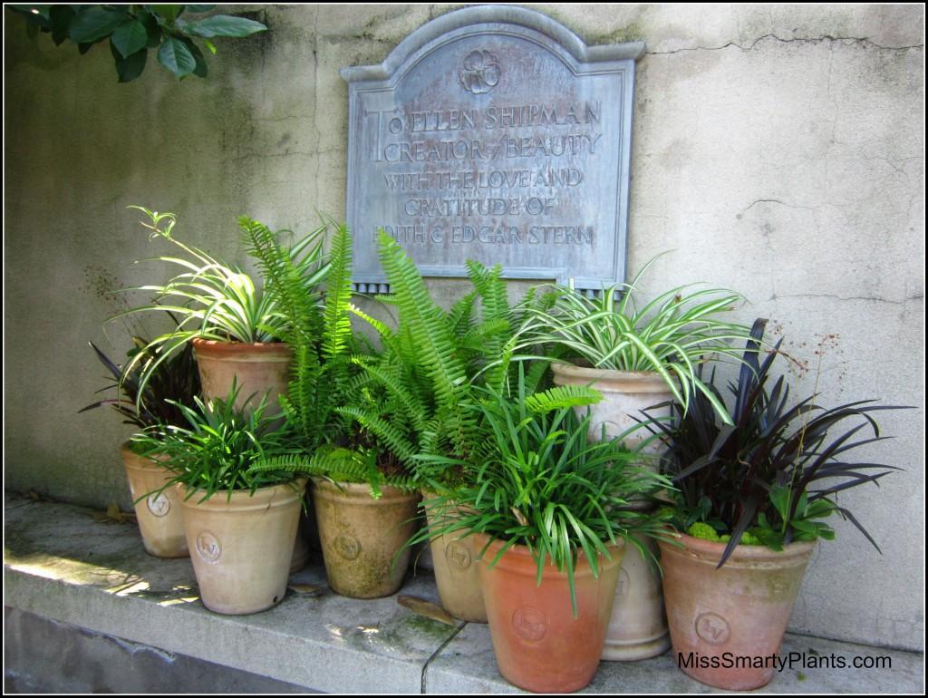 Visiting Longue Vue Gardens