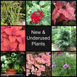 New and underused plants