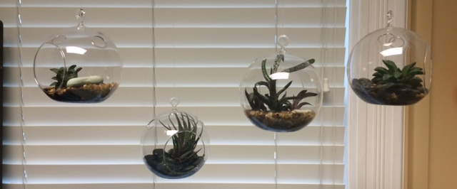 Make Your Own Hanging Succulent Terrarium
