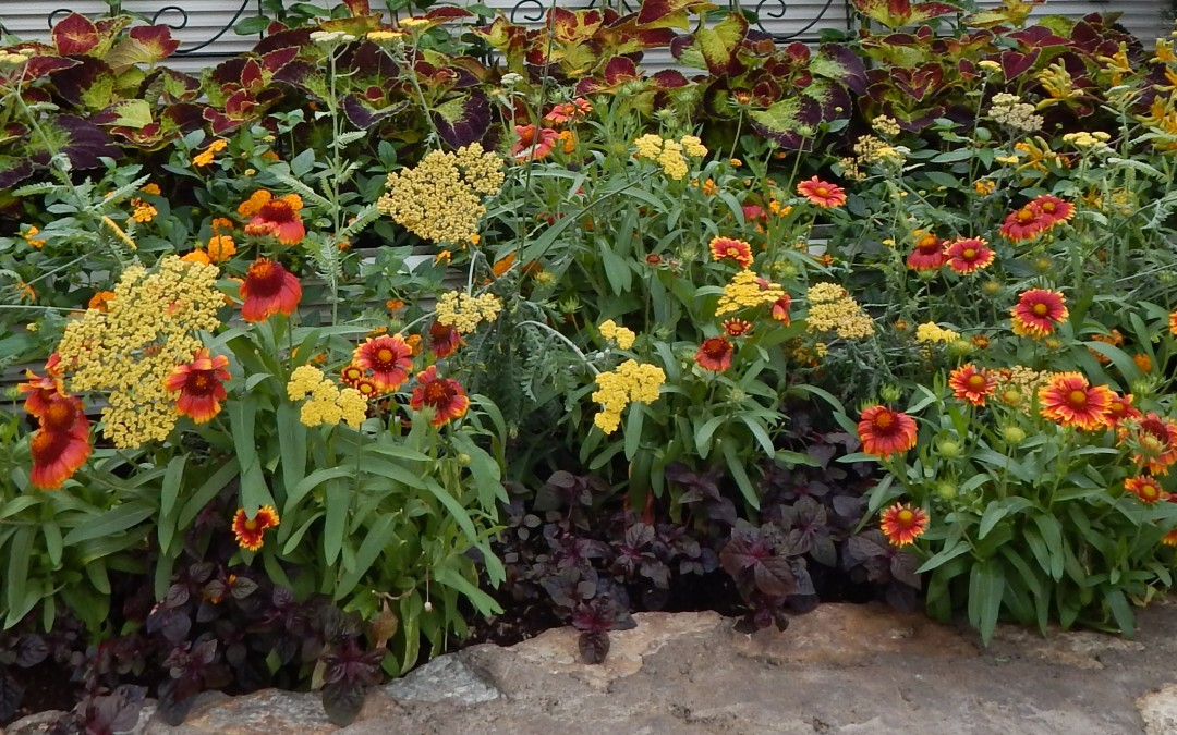 The Sunken Garden at Como Park Conservatory