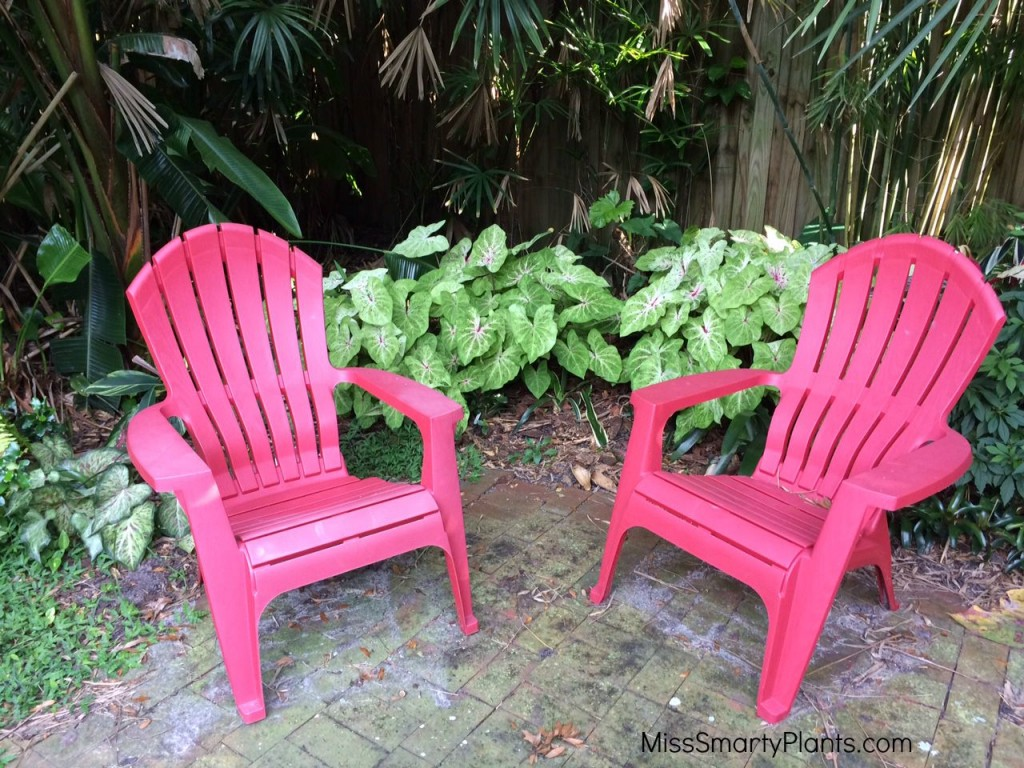 red chairs and caladiums