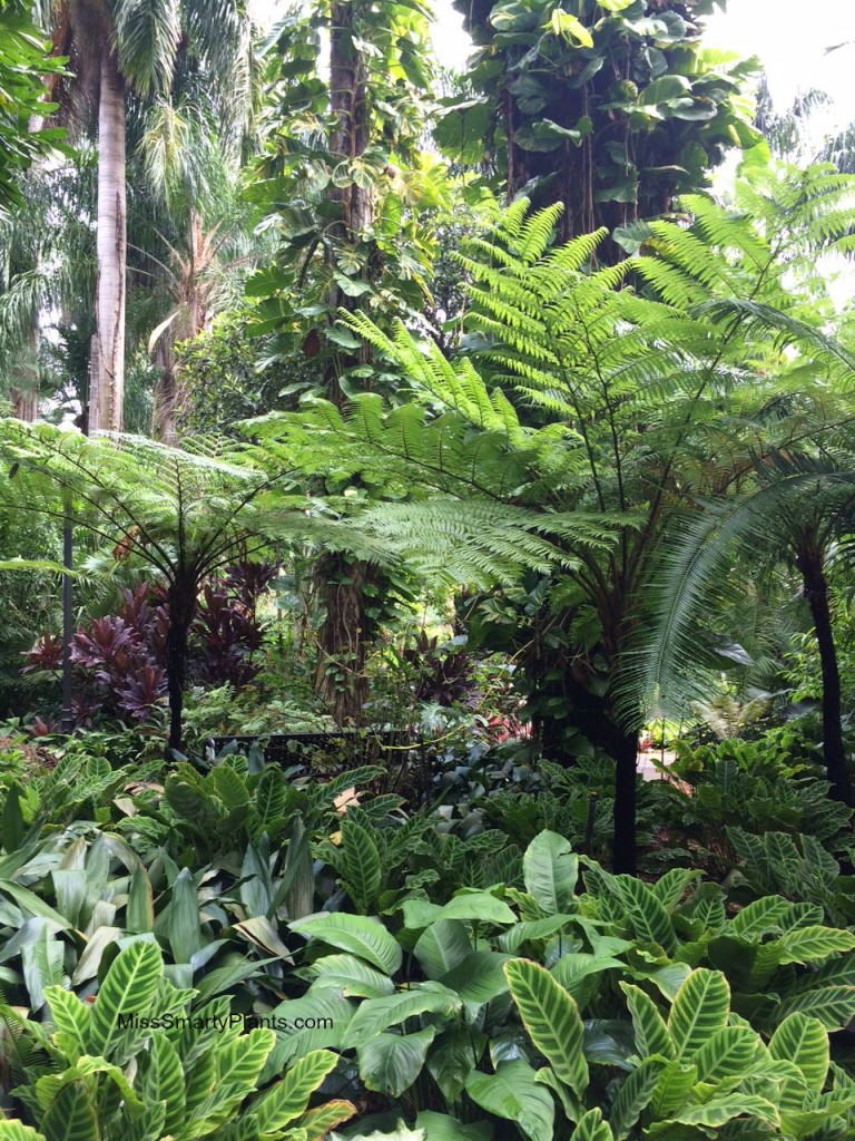 Tree ferns at the Sunken Gardens