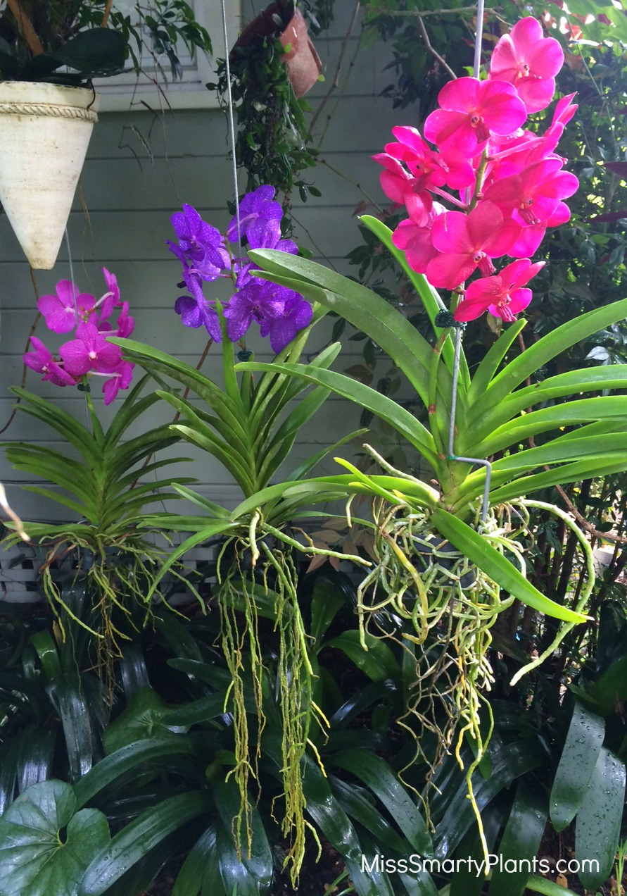 how to put orchids on trees