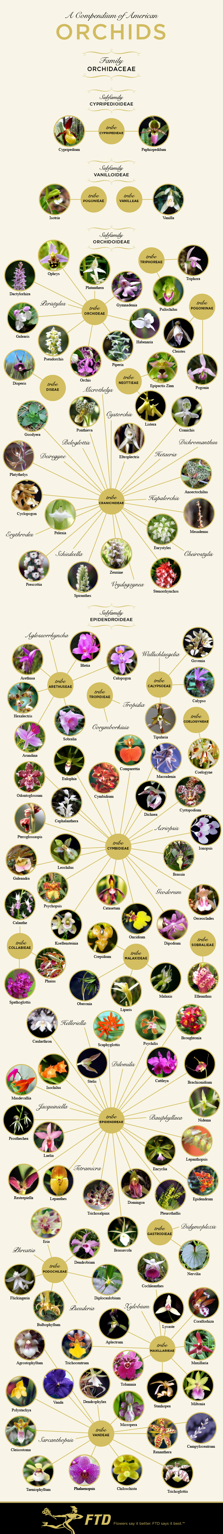 A Compendium of American Orchids