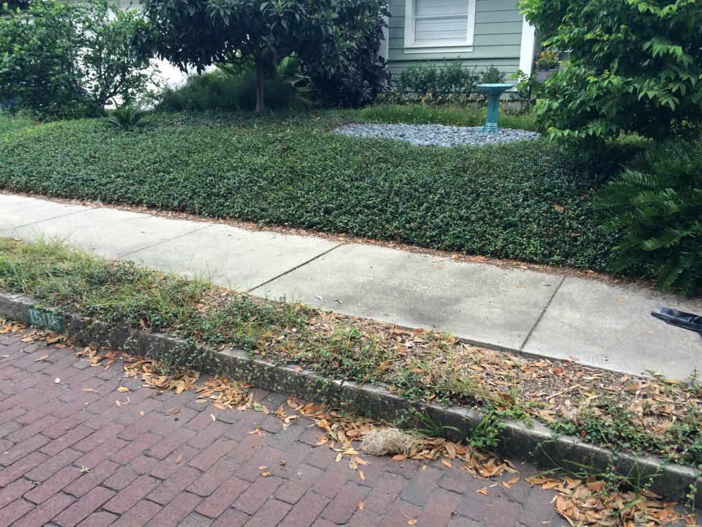 Sidewalk strip plant ideas