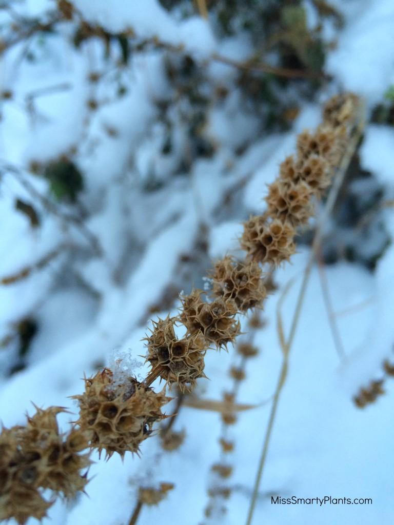 Winter interest in the gardenWinter interest in the garden