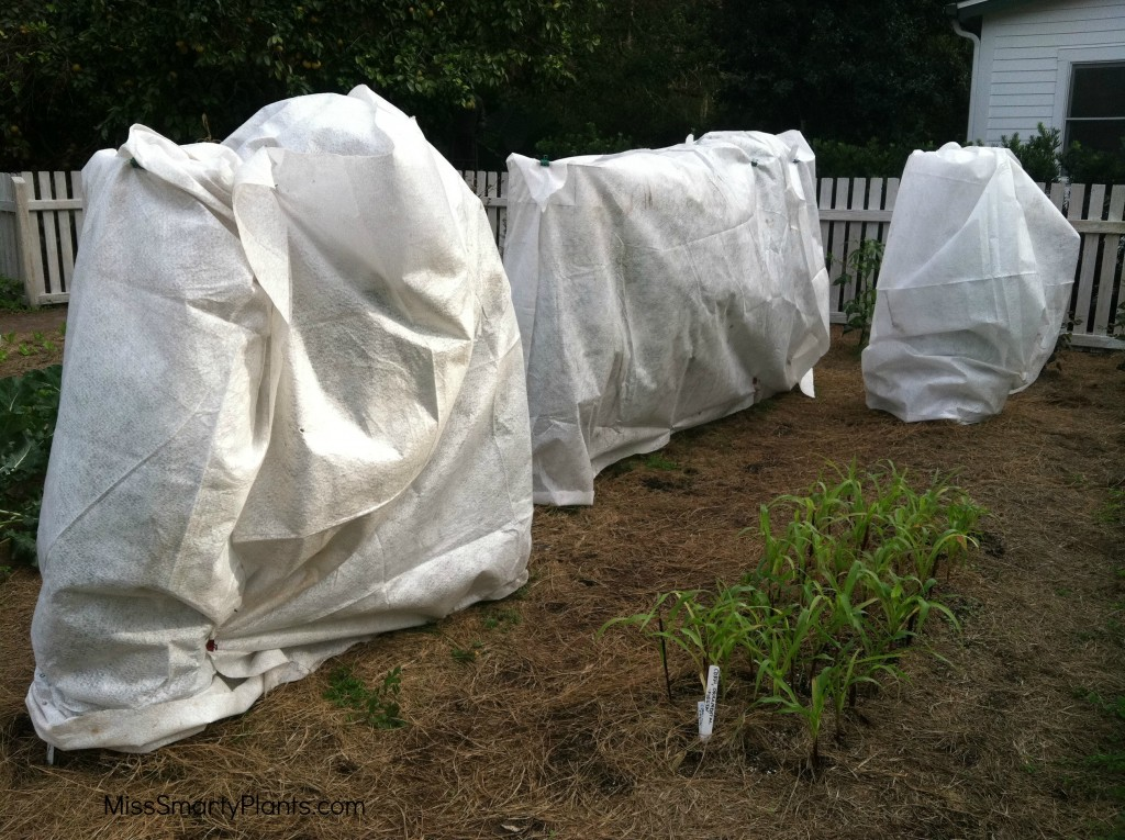 frost protection for plants