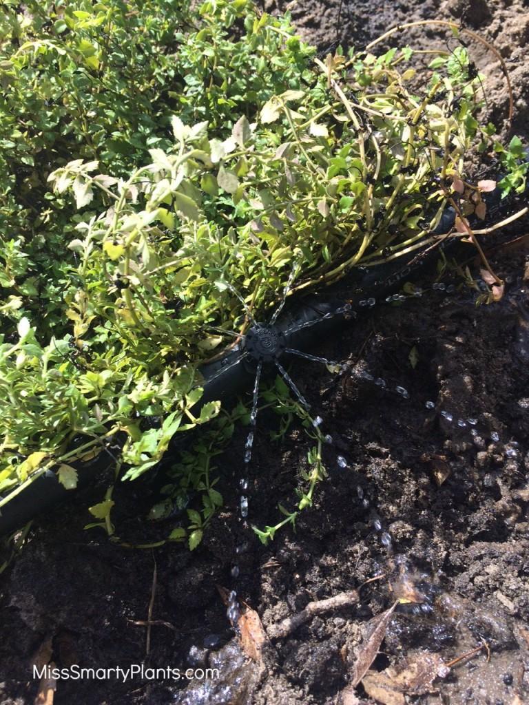 micro irrigation bubbler