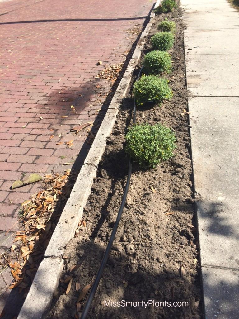 narrow strip irrigation
