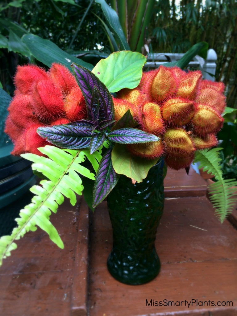 Bixa orellana, Lipstick tree flower arrangement