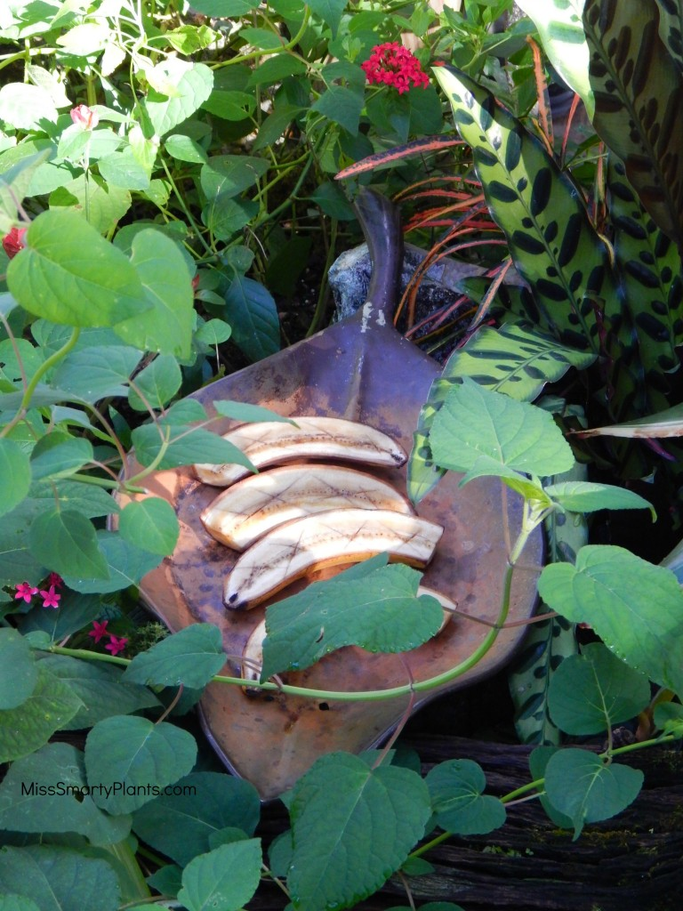 Bananas for butterfly food