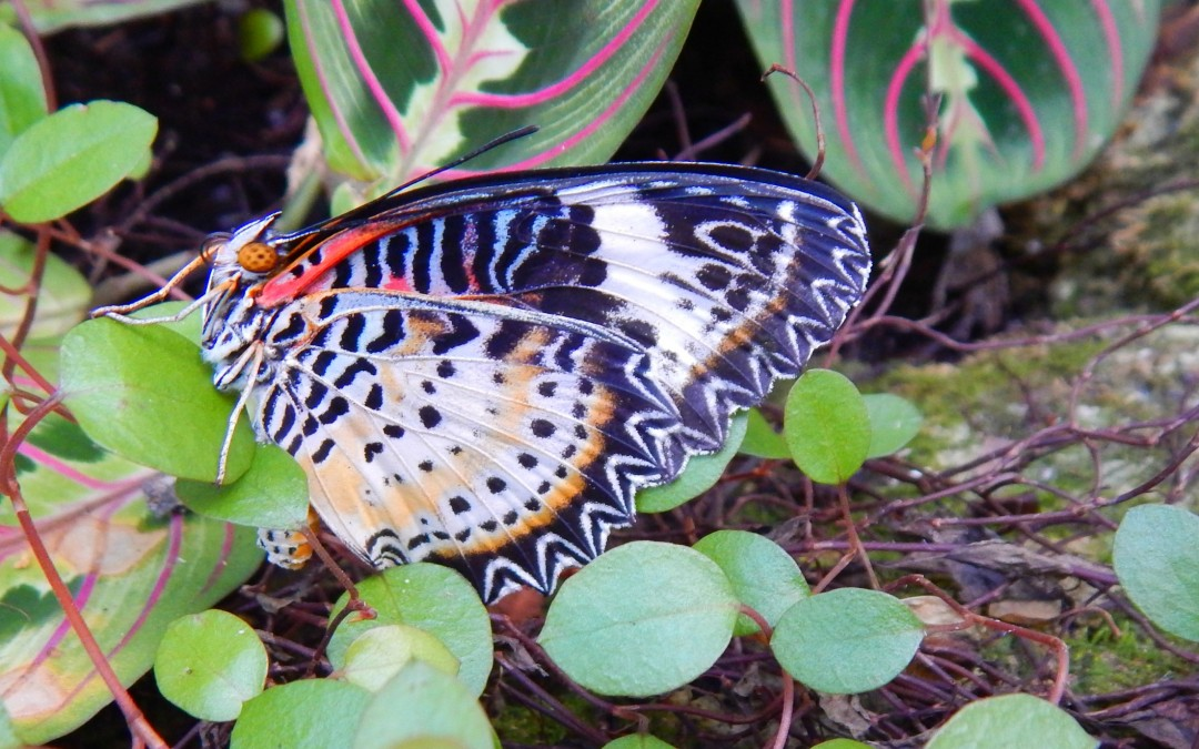 Butterfly Rainforest At The University Of Florida Miss