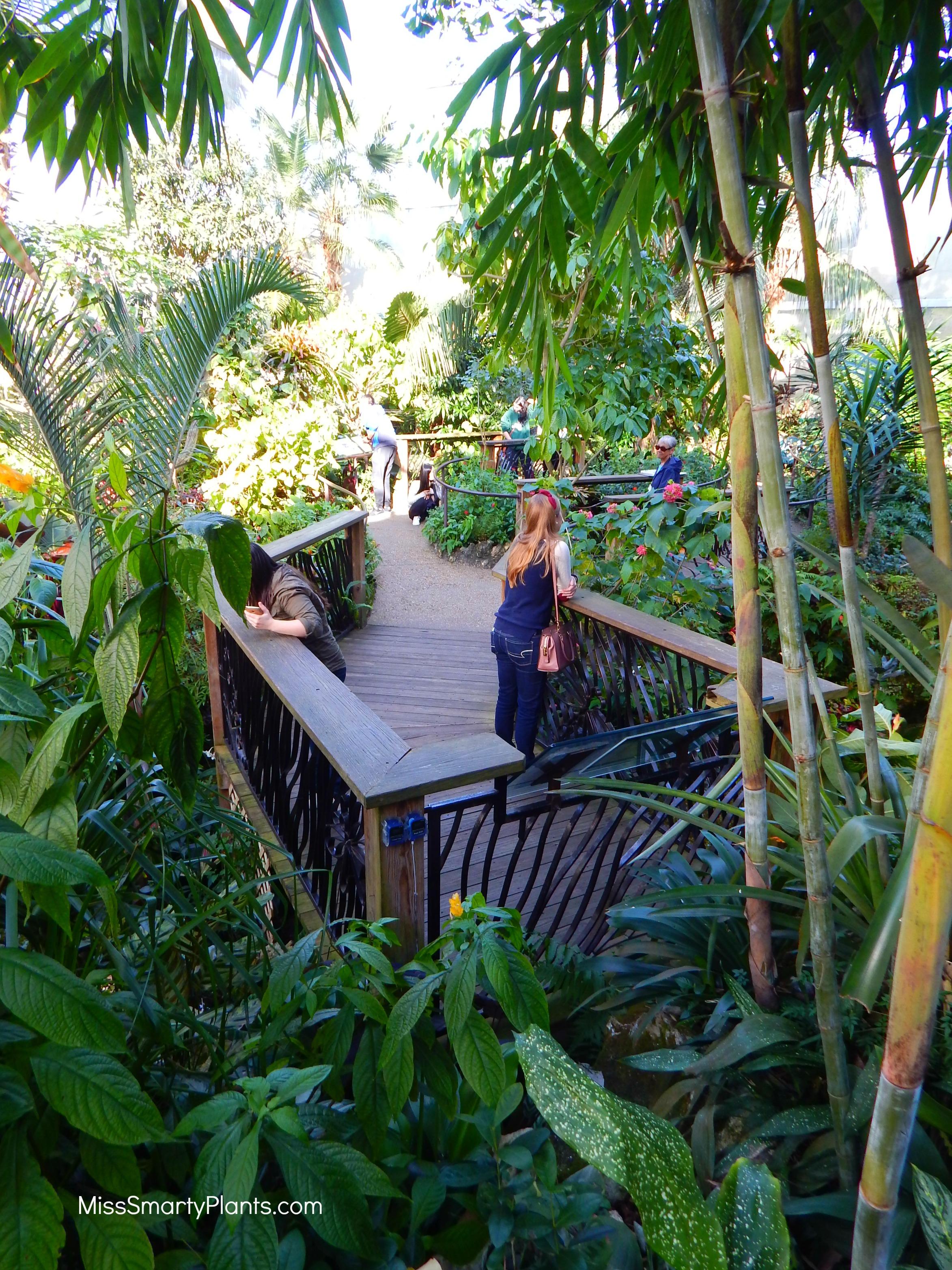butterfly rainforest - Uf Butterfly Garden