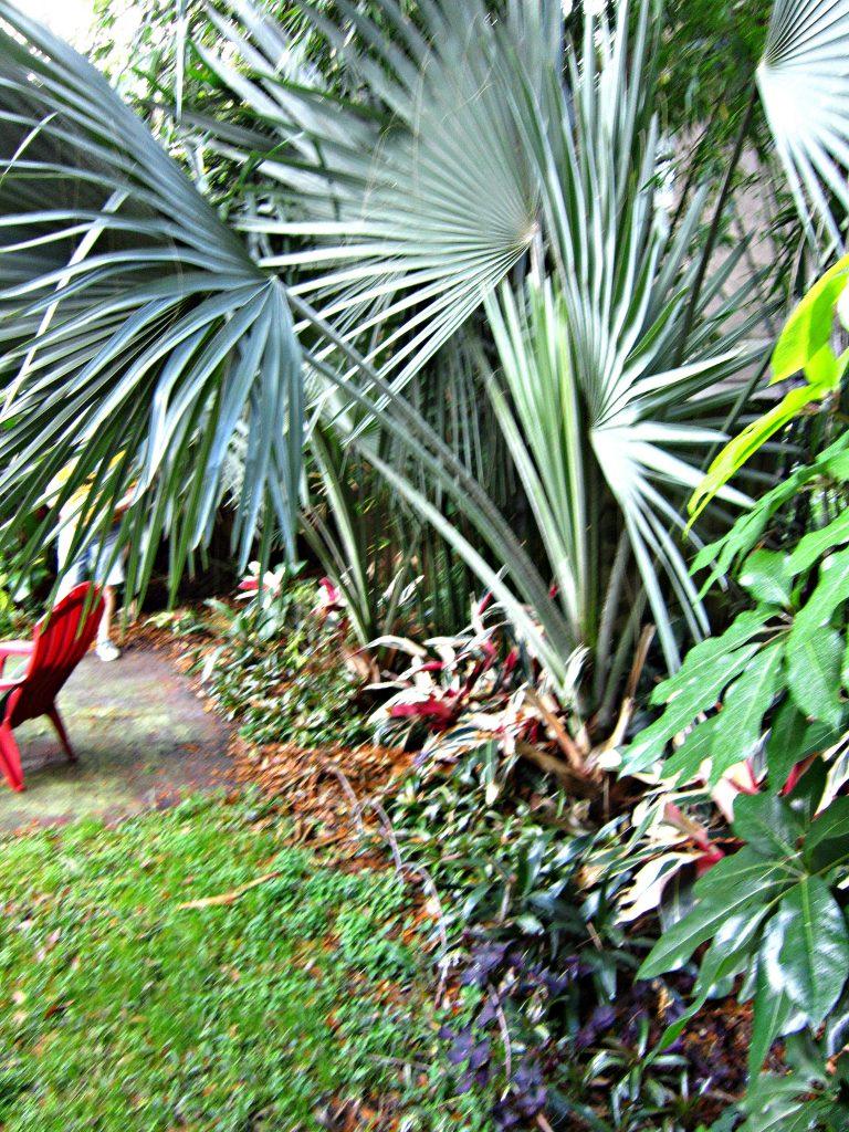 Removing bismark palm