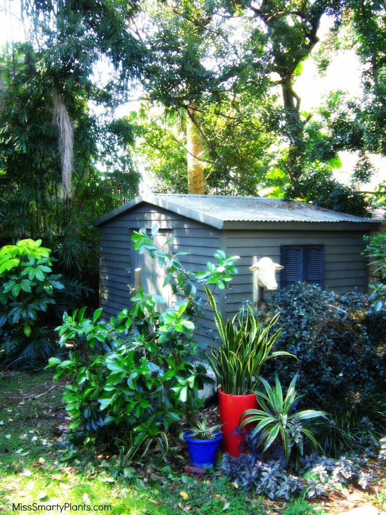yard renovation project