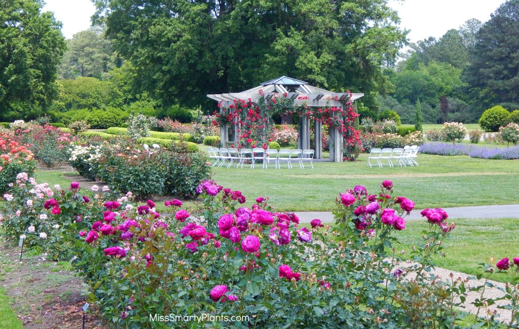 Rose Garden at Norfolk Botanic Garden