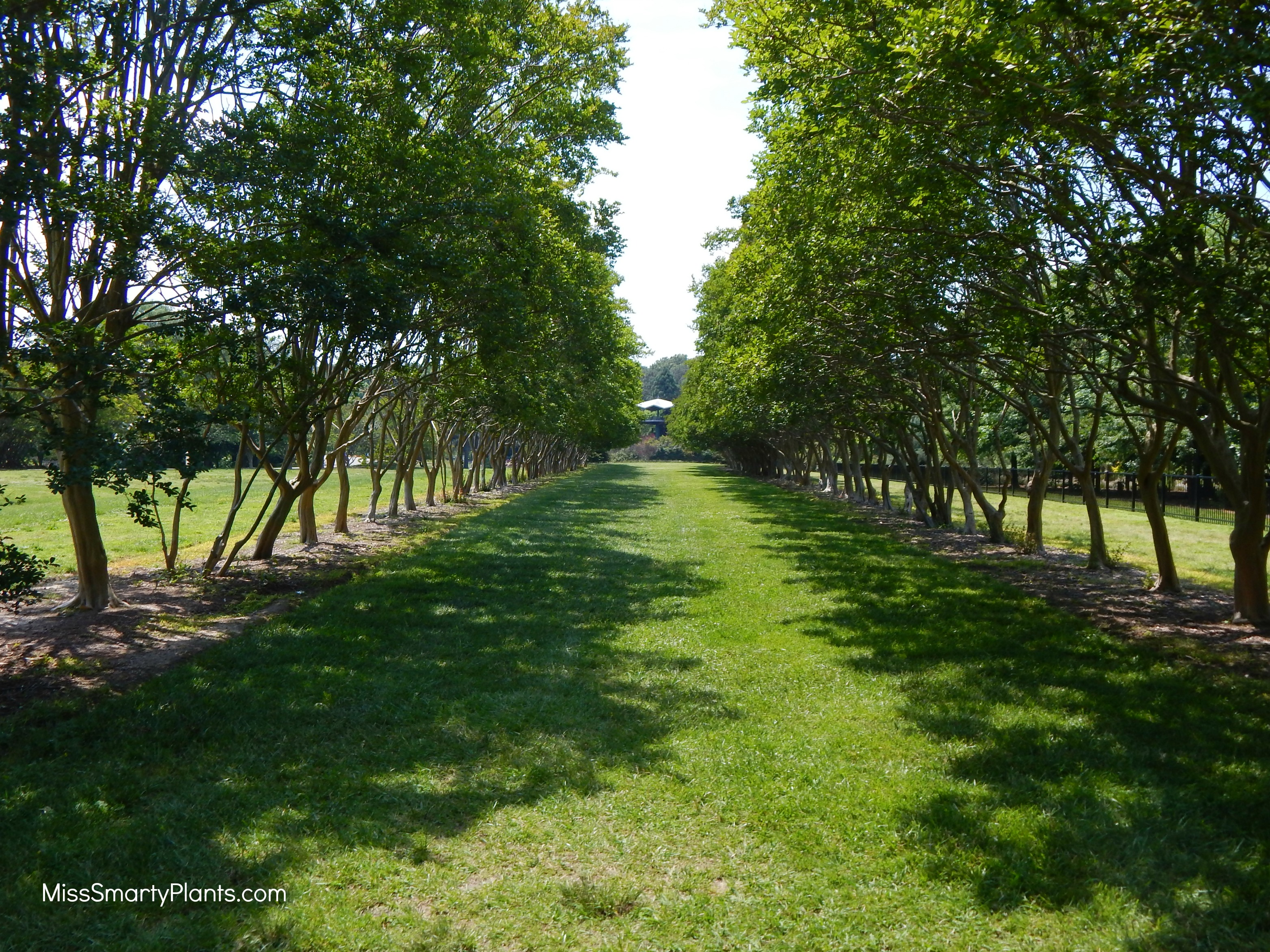 a quick visit to norfolk botanical garden - miss smarty plants