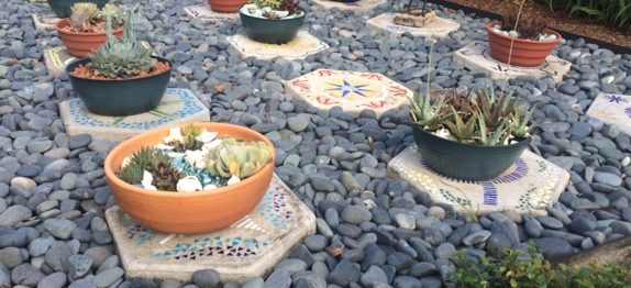 Creating a succulent container garden display
