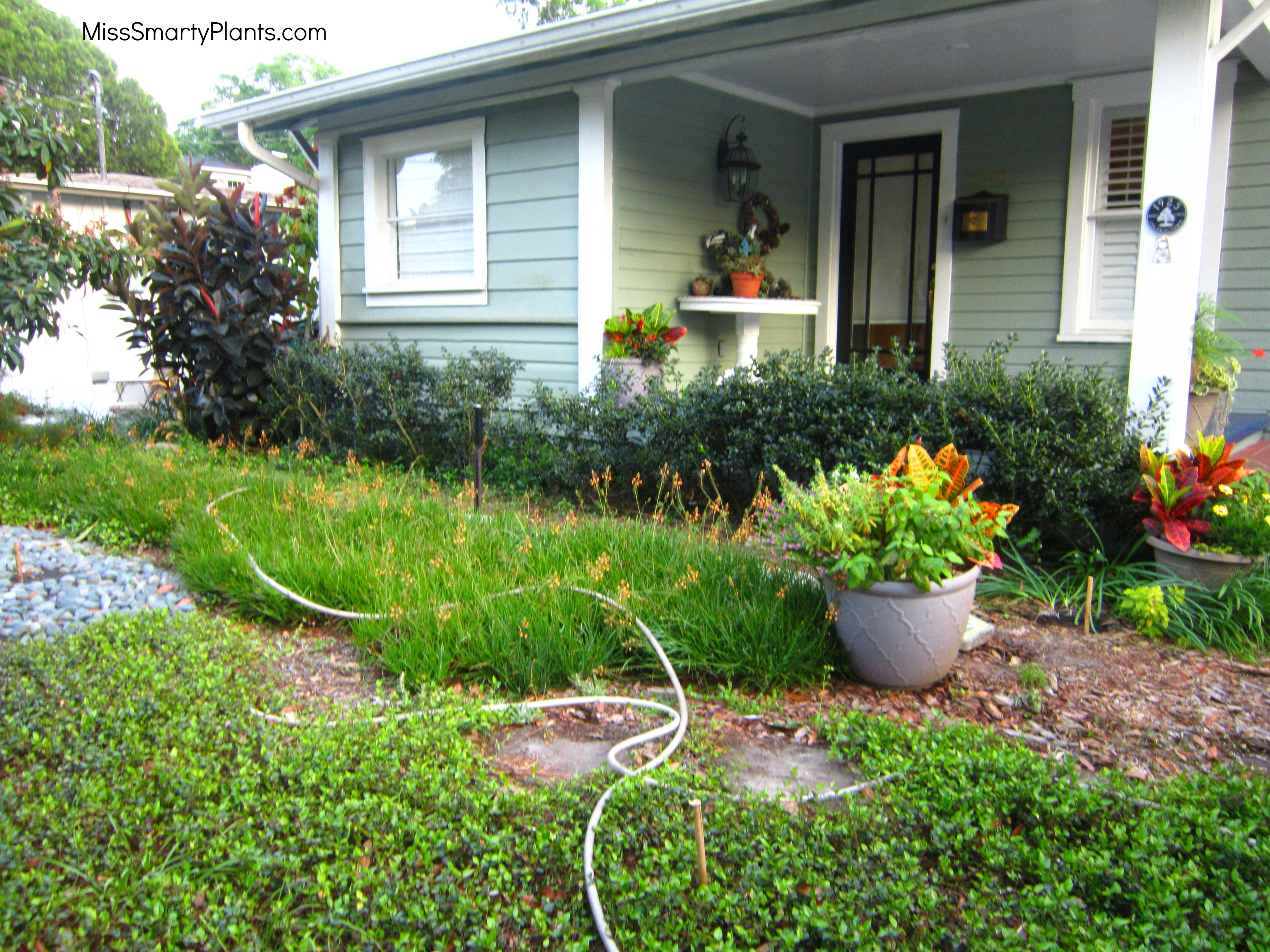 creating a succulent container garden display miss smarty plants