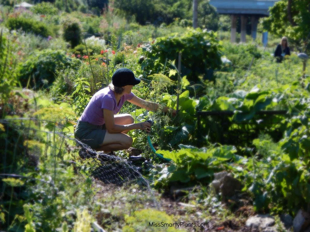 Gardening For Your Health Miss Smarty Plants