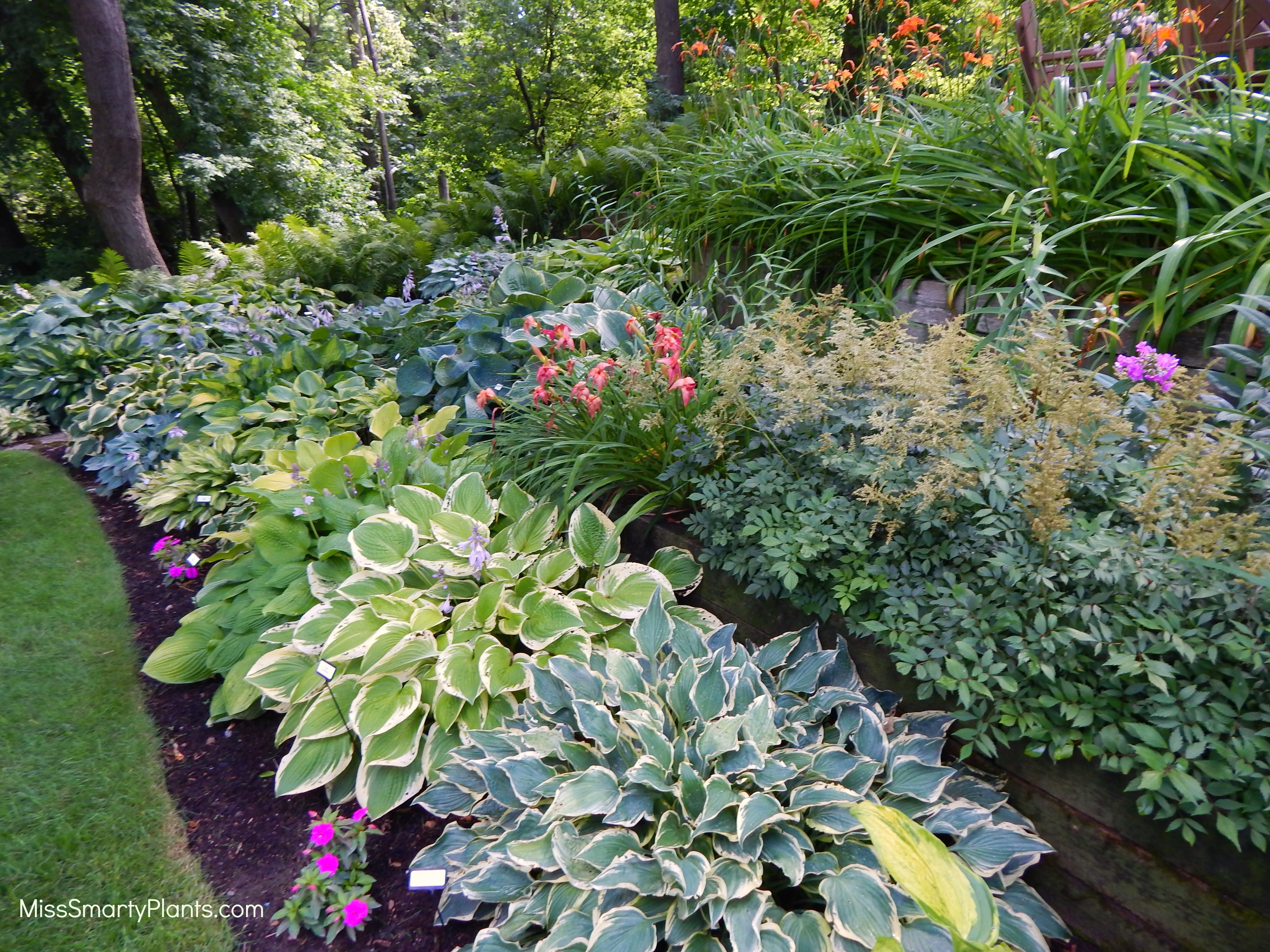 Hostas In Florida Miss Smarty Plants