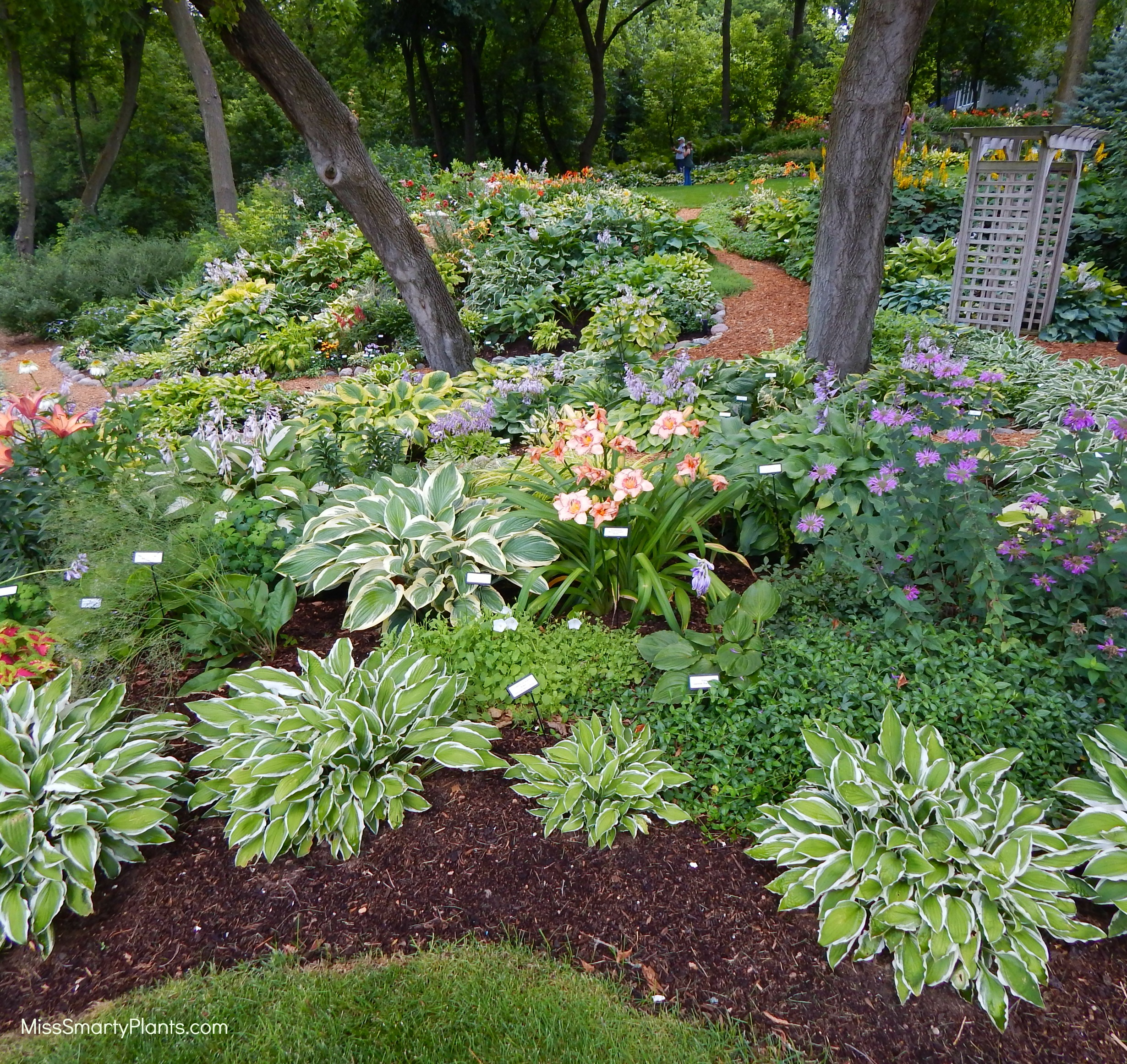 Hostas In Florida Miss Smarty Plants