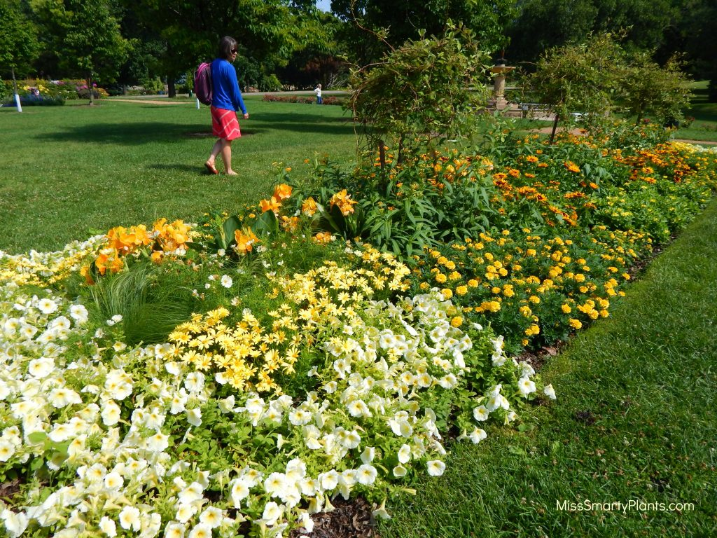 Yellow theme garden at Lyndale Park Gardens