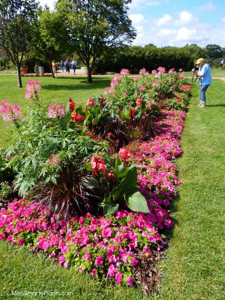 Pink theme garden at Lyndale Park Gardens