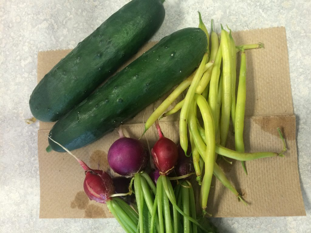 'Corinto' Organic (F1) Cucumber and 'Gold Play' Beans