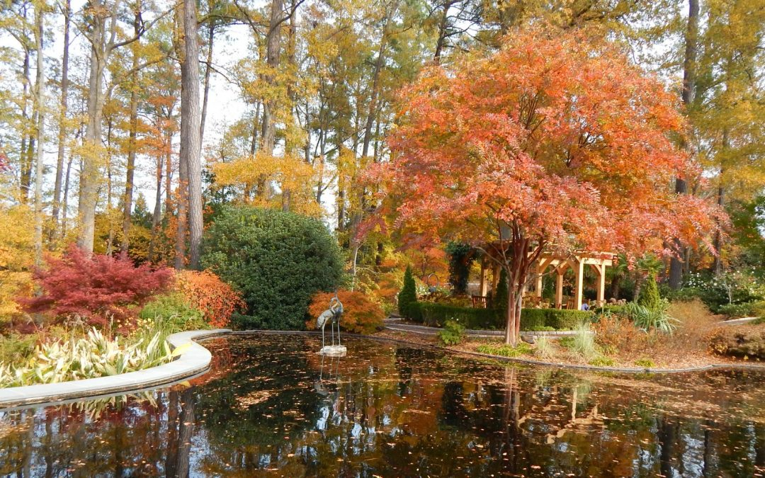 Visiting Duke Gardens in Fall