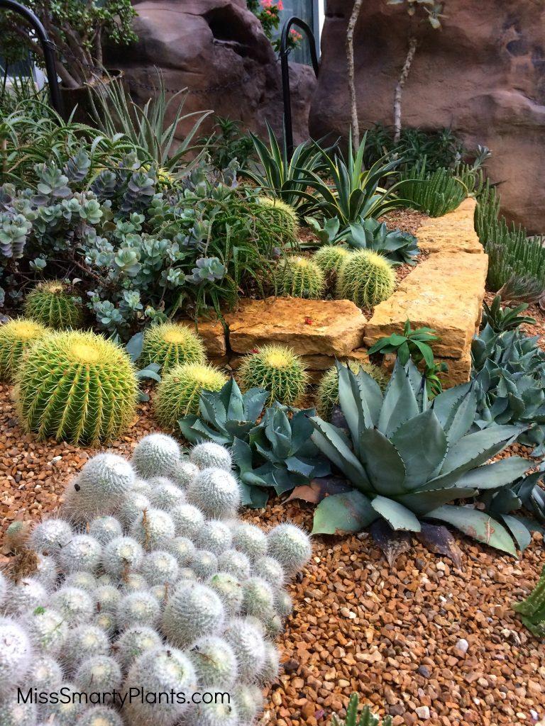 Desert Garden at Franklin Park Conservatory