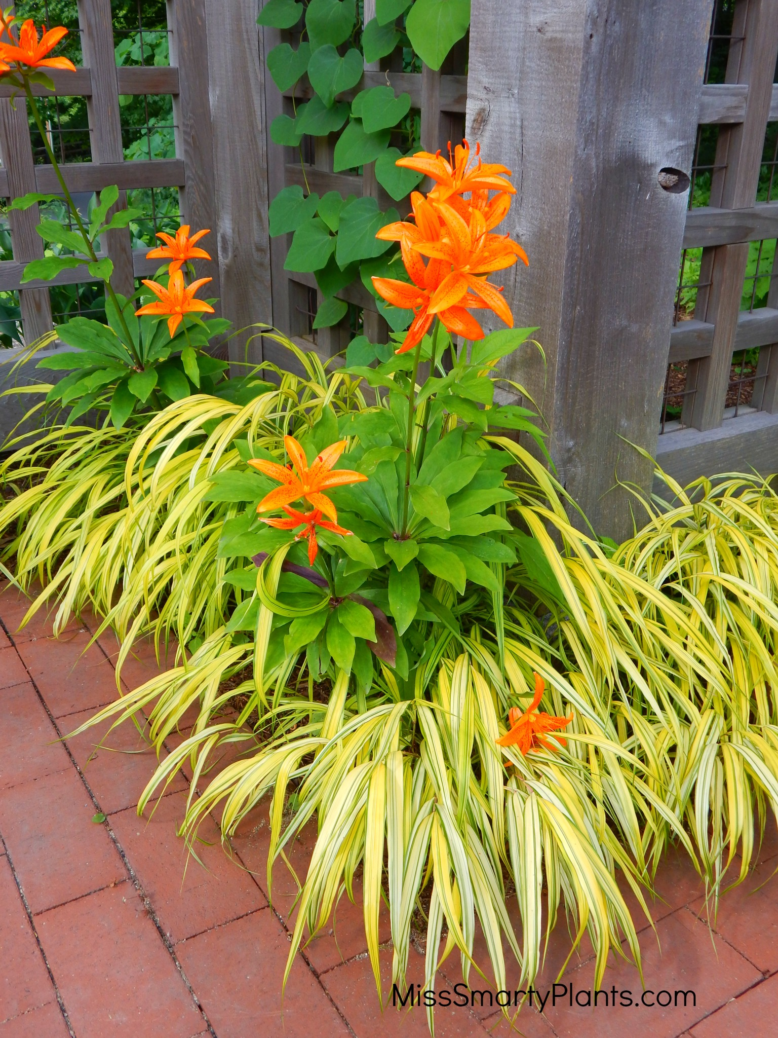 ... The Plants I Was Considering Together And This Easy Garden Design Tool  Also Helped Me Eliminate Plants Where The Colors Were Just Not Compatible  (sorry, ...