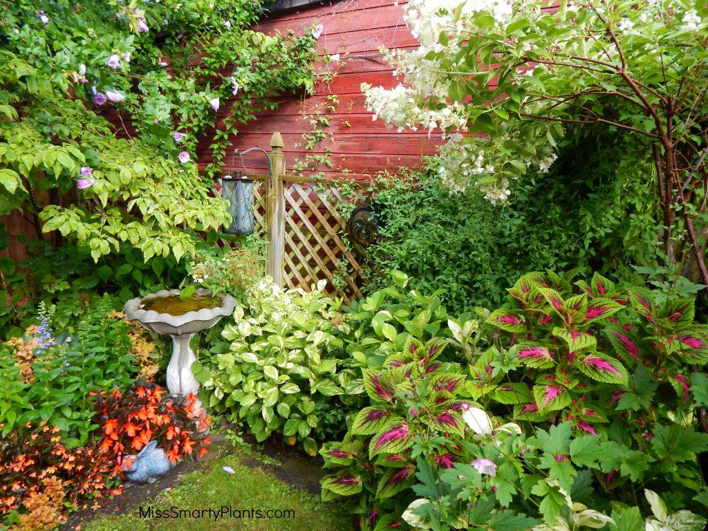 Colorblind gardening