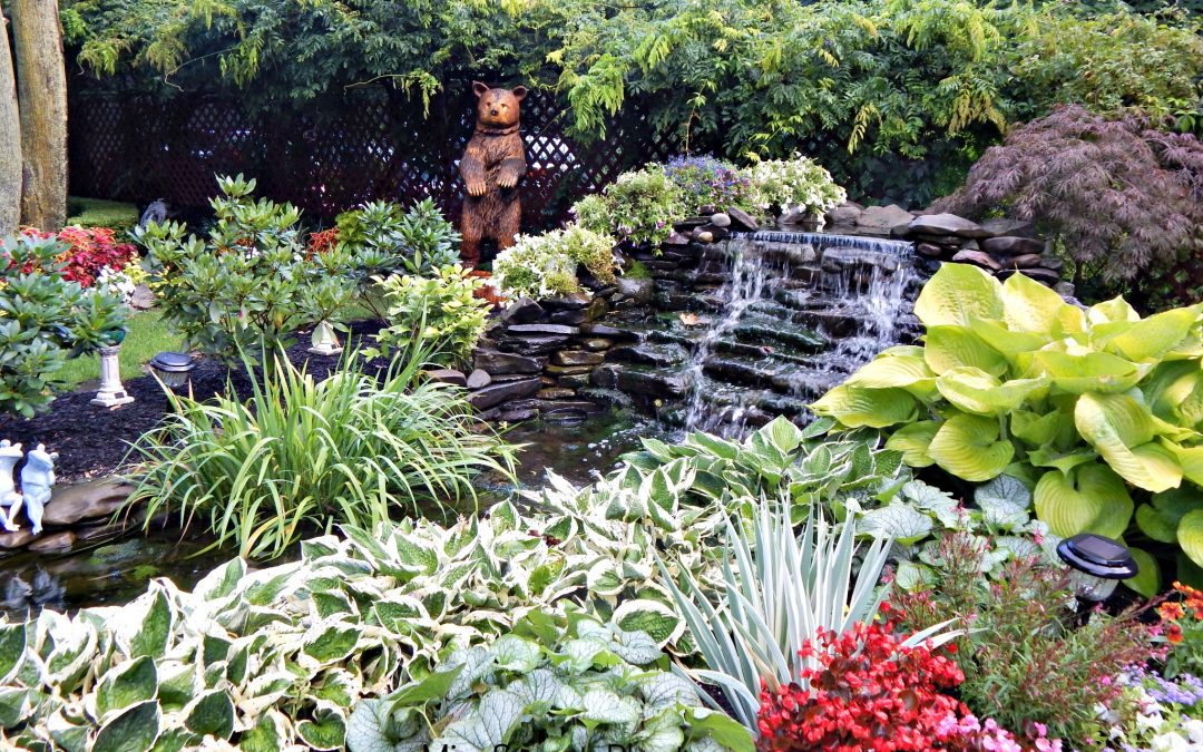 Pond Life: Building Your Very Own Pond