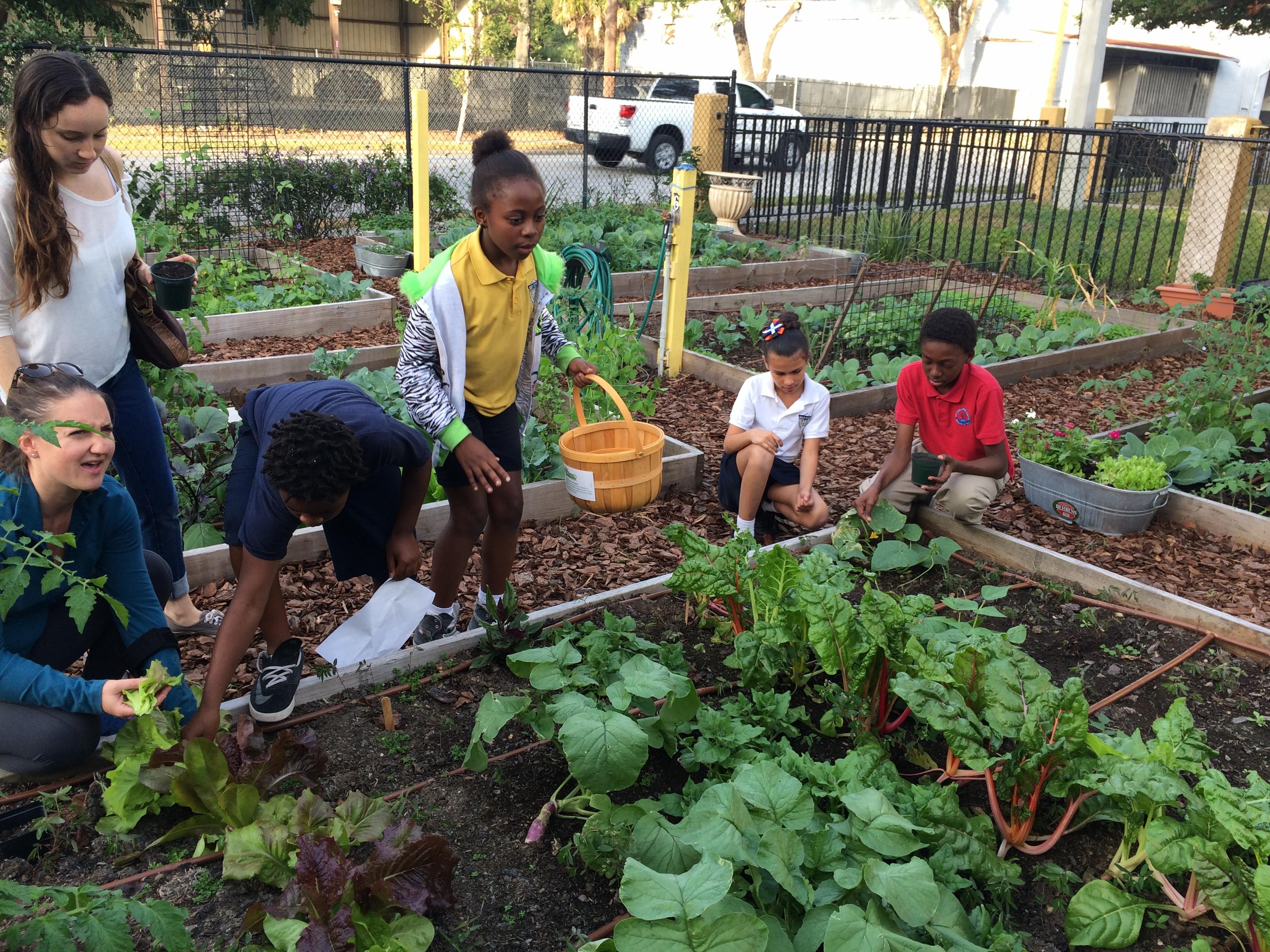 DIY Backyard Gardening Ideas for Kids   Miss Smarty Plants