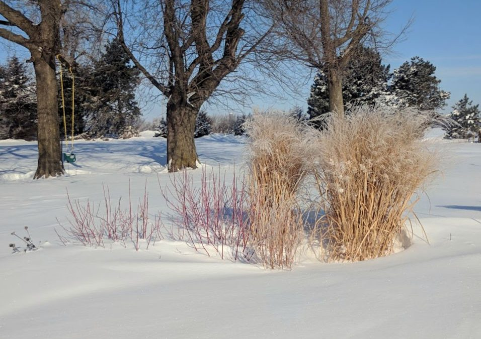 Grasses that stand up in winter
