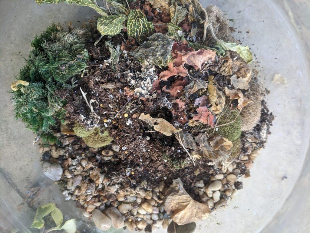 DIY terrarium gardening project