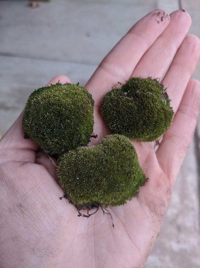 DIY terrarium gardening project moss