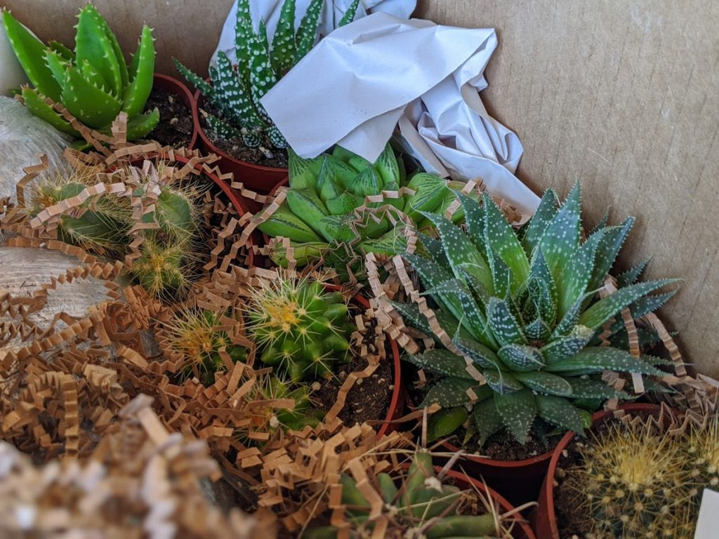best succulents indoors