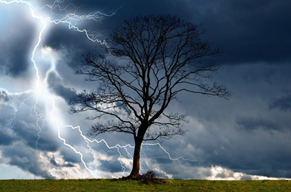 Signs That Your Oak Tree Was Struck By Lightning