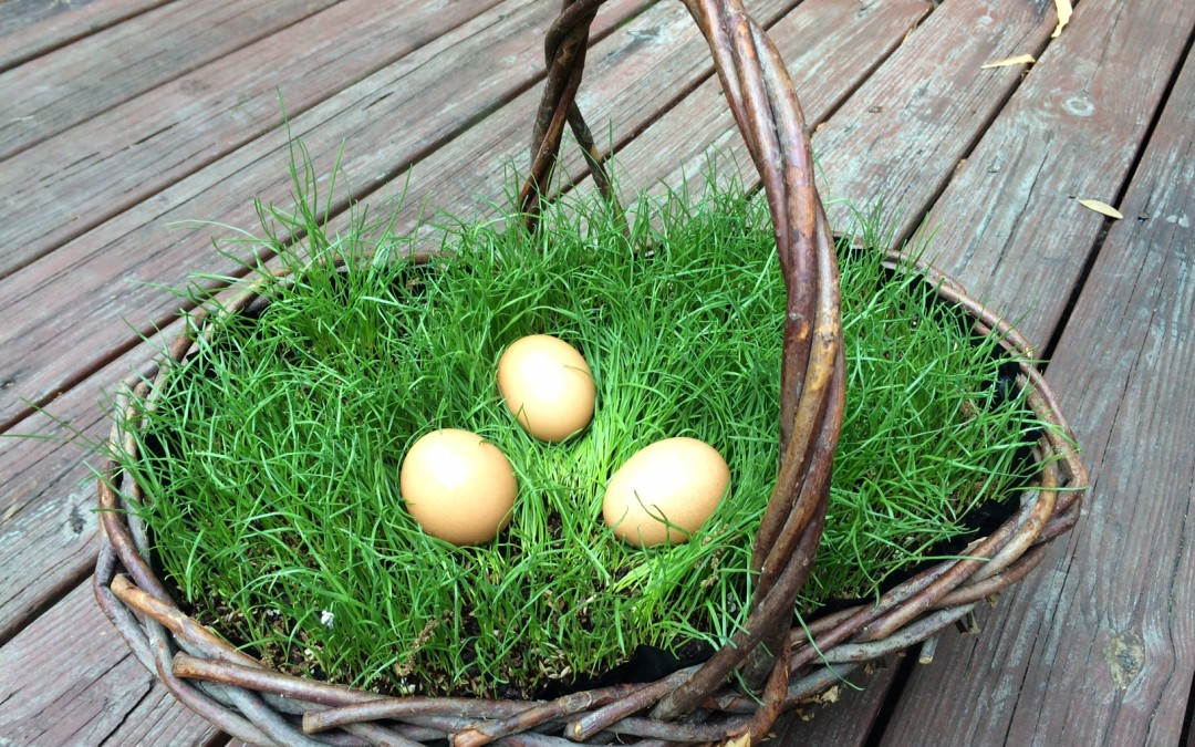 5 Steps to Grow Your Own Live Easter Basket